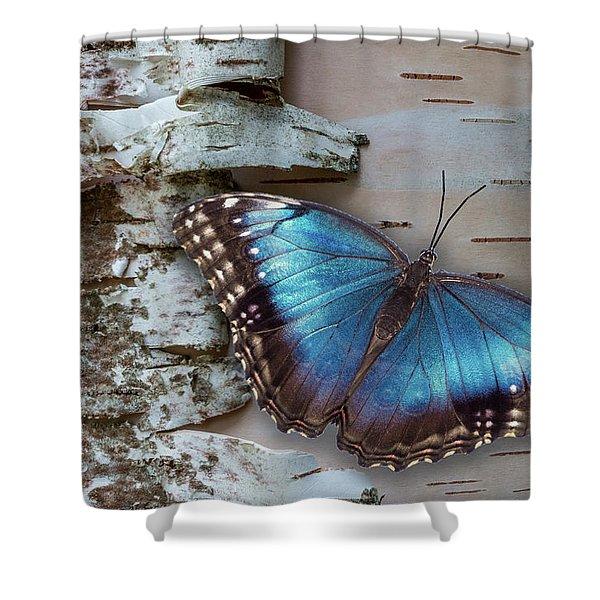 Blue Morpho Butterfly On White Birch Bark Shower Curtain