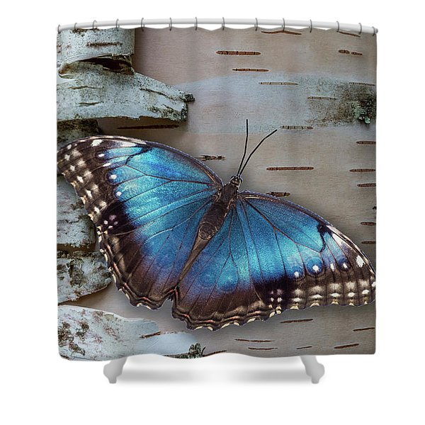 Shower Curtain featuring the photograph Blue Morpho Butterfly On White Birch Bark by Patti Deters