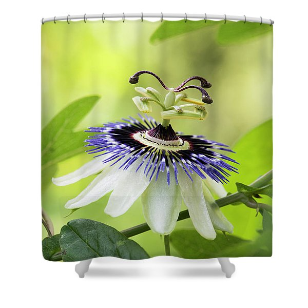 Blue Passion Flower Shower Curtain