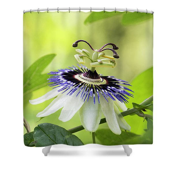 Blue Passion Flower Shower Curtain