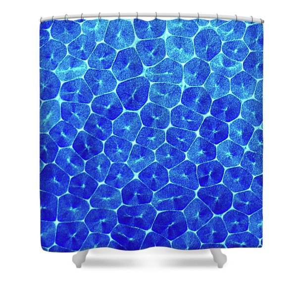 Shower Curtain featuring the photograph Cells by Beauty of Science