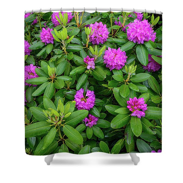 Blue Ridge Mountains Rhododendron Blooming Shower Curtain