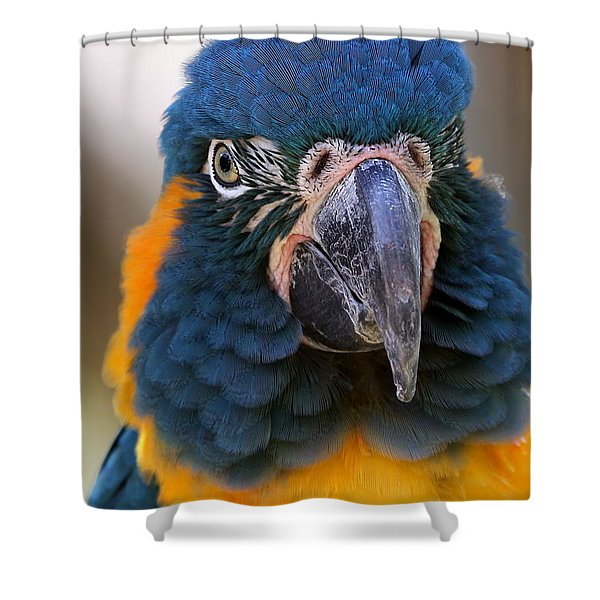 Blue-throated Macaw Close-up Shower Curtain