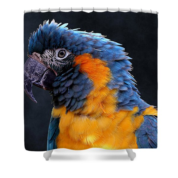 Blue-throated Macaw Profile Shower Curtain