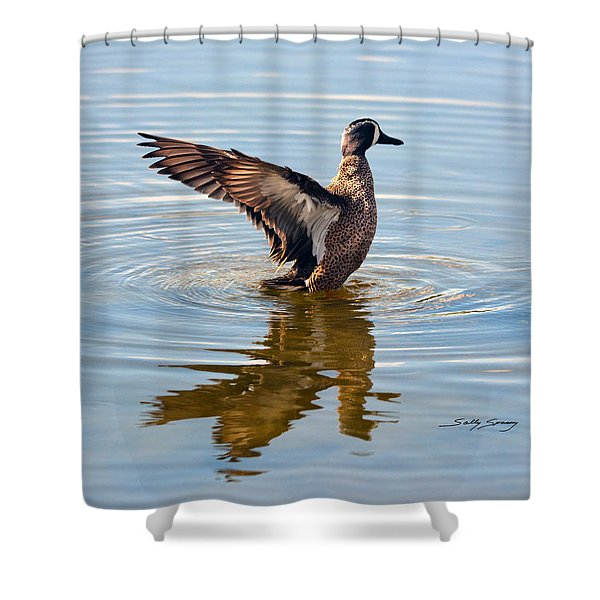 Blue Winged Teal 3 Shower Curtain