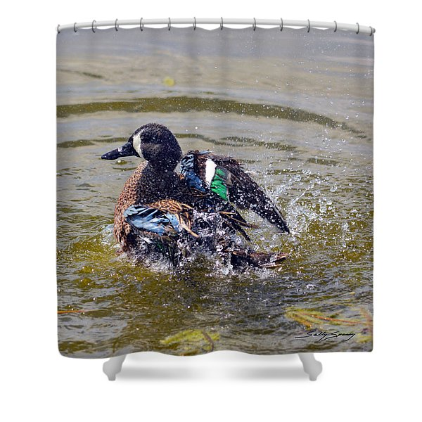 Blue Winged Teal 5 Shower Curtain