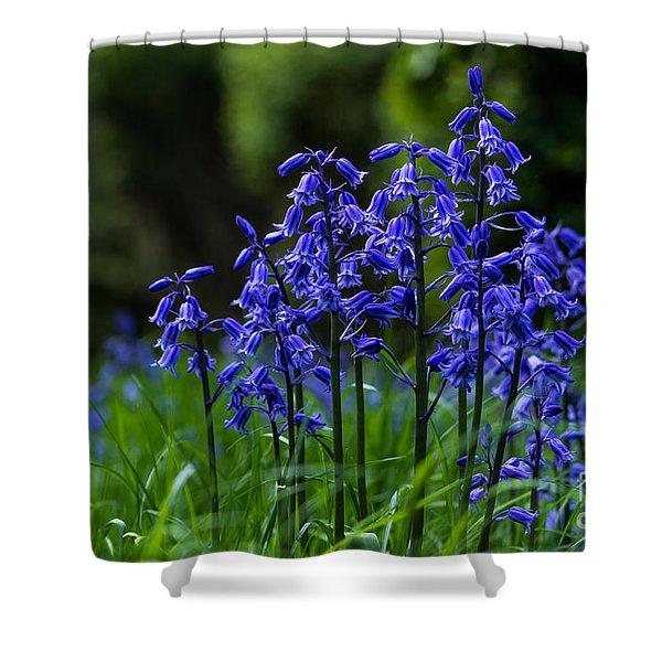 Bluebells Shower Curtain