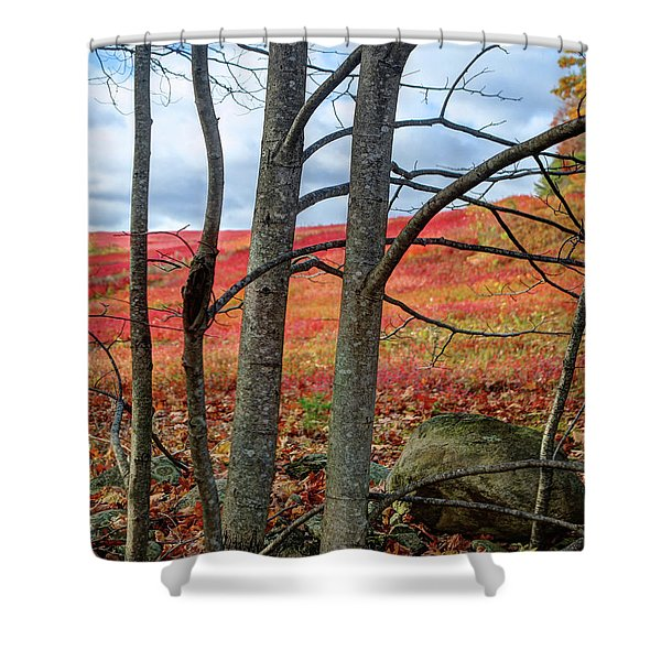 Blueberry Field Through The Wall - Cropped Shower Curtain
