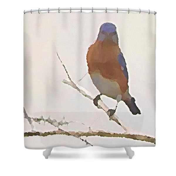 Bluebird Stare  Shower Curtain