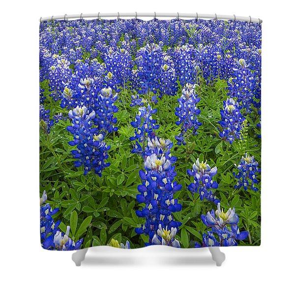 Bluebonnets Up Close Shower Curtain