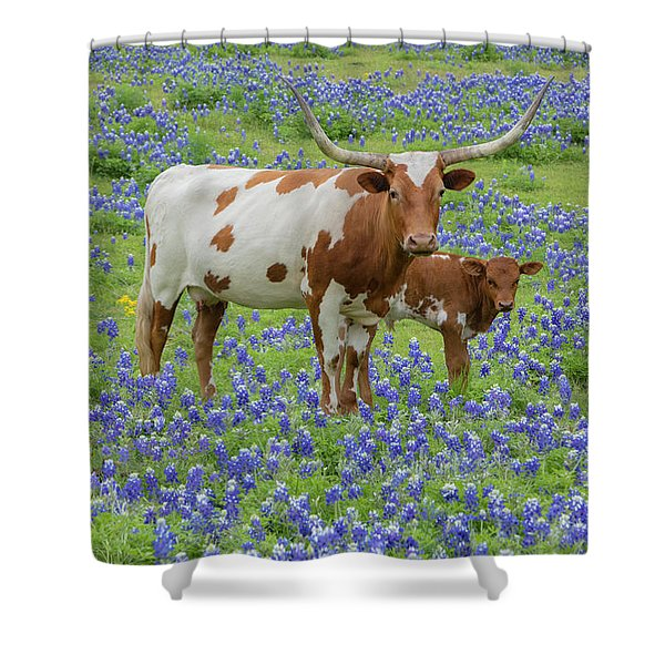 Bluebonnets With Longhorn And Calf 1 Shower Curtain