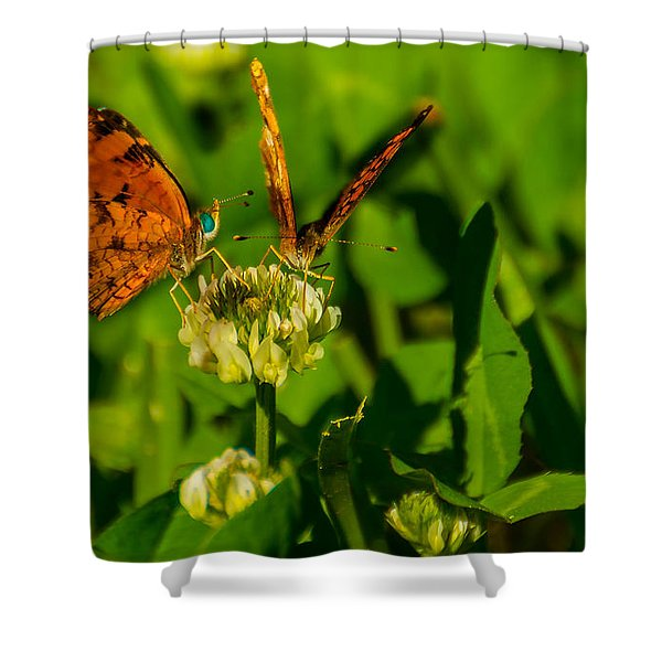 Bluehead Butterfly Shower Curtain