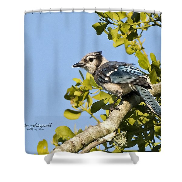 Bluejay Shower Curtain