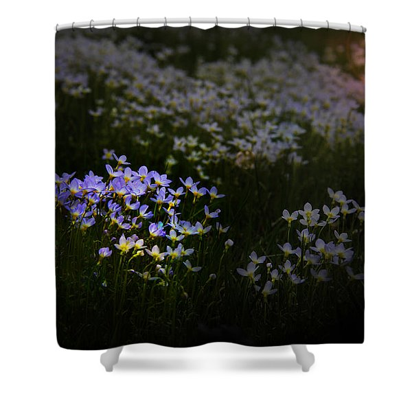 Bluets In Momentary Light Shower Curtain