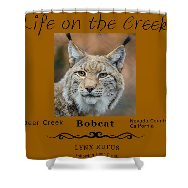 Bobcat - Lynx Rufus Shower Curtain