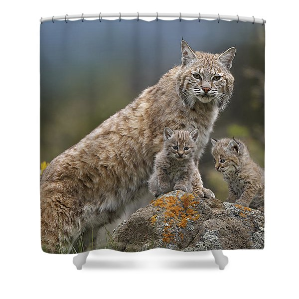 Bobcat Mother And Kittens North America Shower Curtain