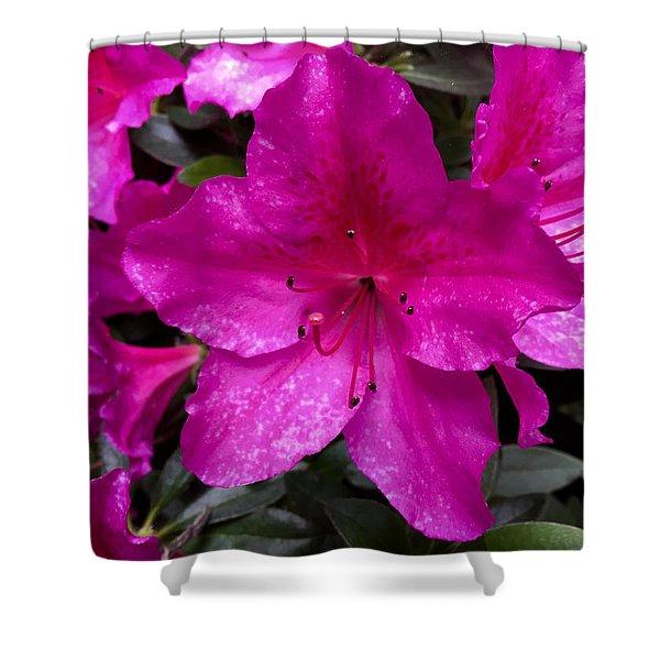 Bold Pink Flower Shower Curtain