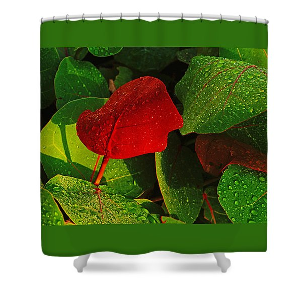 Bold Red Sea Grape Leaf Shower Curtain