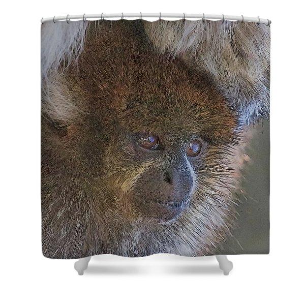 Bolivian Grey Titi Monkey Shower Curtain