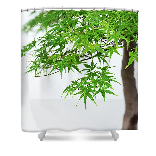 Bonsai Acer Tree Shower Curtain
