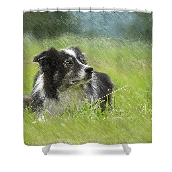 Border Collie - Dwp2189332 Shower Curtain