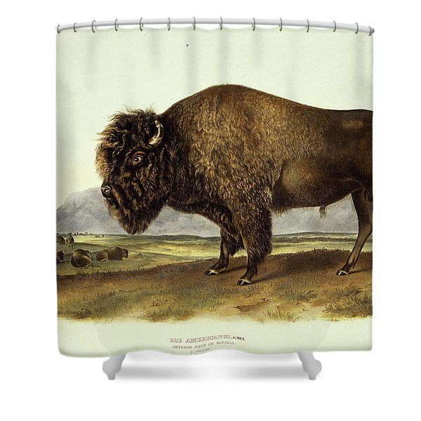Bos Americanus, American Bison Shower Curtain