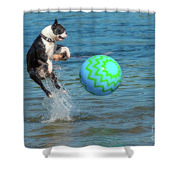 Boston Terrier High Jump Shower Curtain