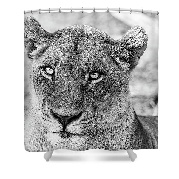Botswana  Lioness In Black And White Shower Curtain