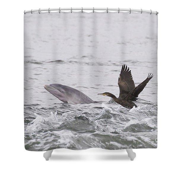 Baby Bottlenose Dolphin - Scotland #10 Shower Curtain