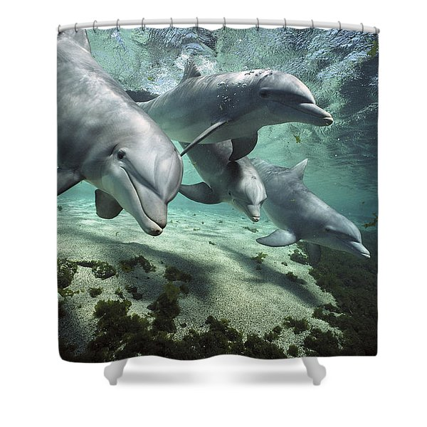 Four Bottlenose Dolphins Hawaii Shower Curtain
