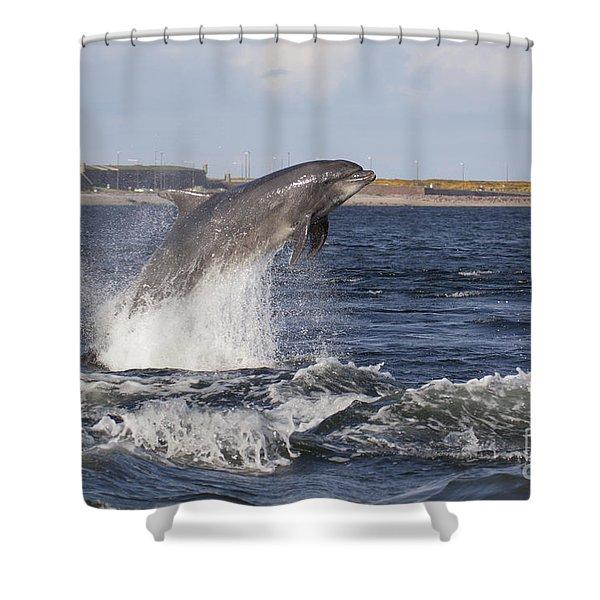 Bottlenose Dolphin - Scotland  #26 Shower Curtain