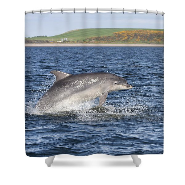 Bottlenose Dolphin - Scotland  #32 Shower Curtain
