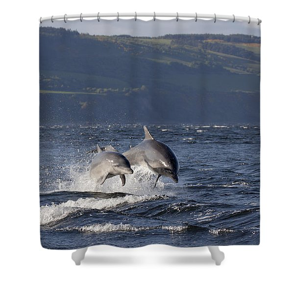 Bottlenose Dolphins Leaping - Scotland  #37 Shower Curtain