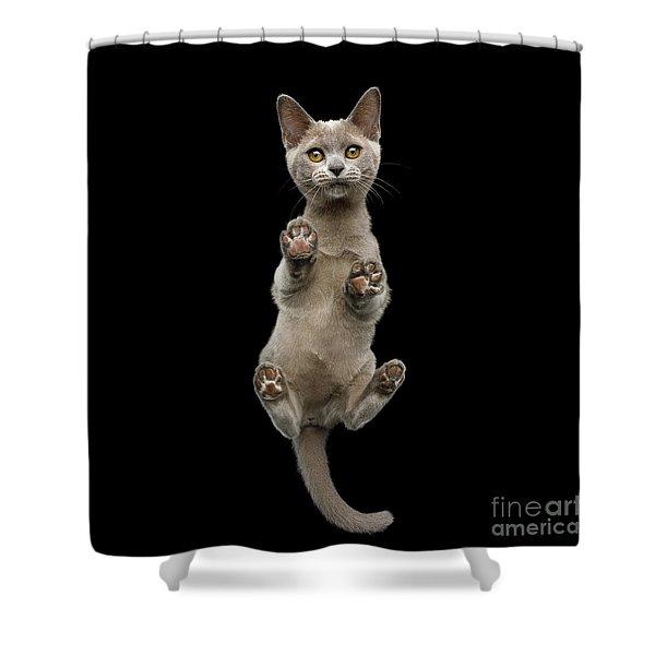 Bottom View Of Kitten Shower Curtain