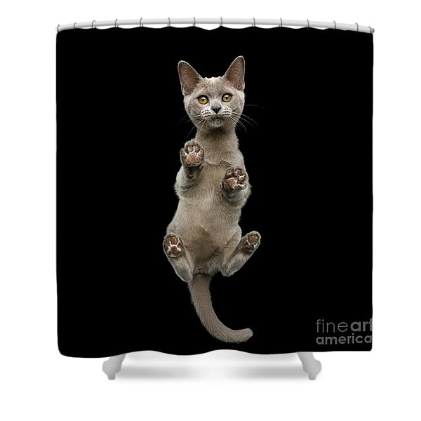 Bottom View Of Kitten Shower Curtain