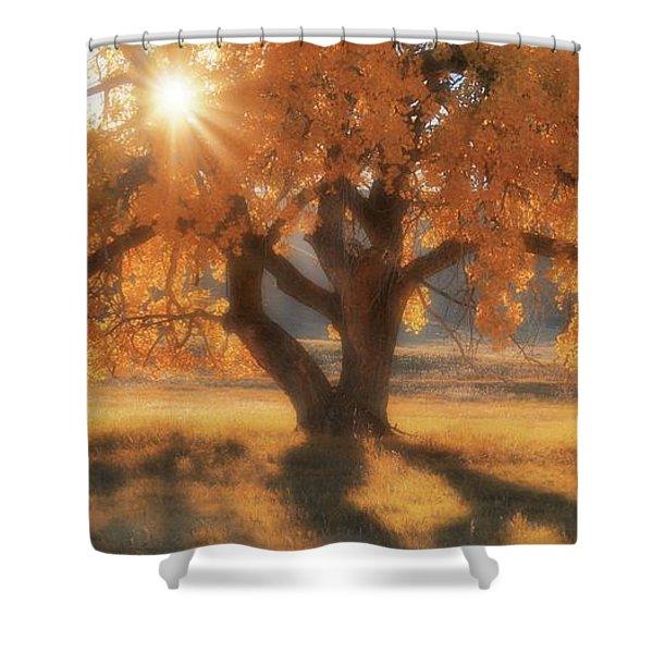 Boxelder's Autumn Tree Shower Curtain