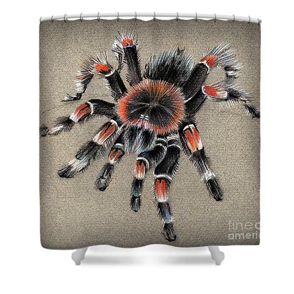 Brachypelma Smithi  Mexican Red Knee Tarantula Shower Curtain