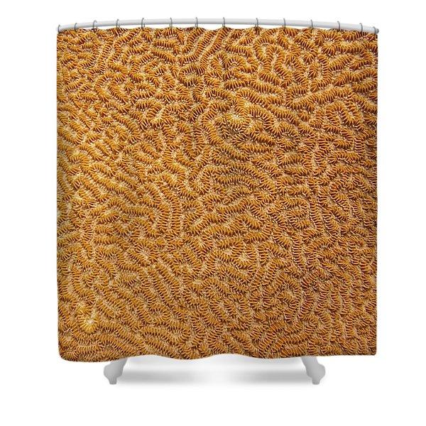 Brain Coral 47 Shower Curtain