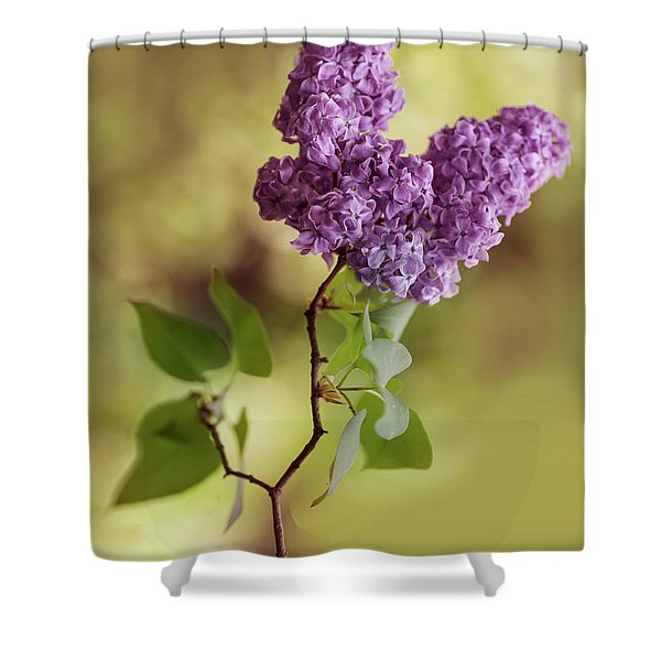 Shower Curtain featuring the photograph Branch Of Fresh Violet Lilac by Jaroslaw Blaminsky