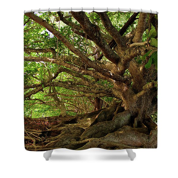 Branches And Roots Shower Curtain