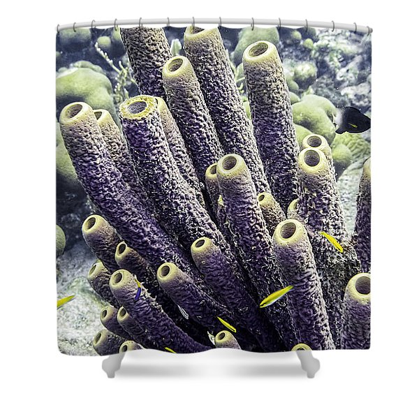 Shower Curtain featuring the photograph Branching Tube Sponge by Perla Copernik