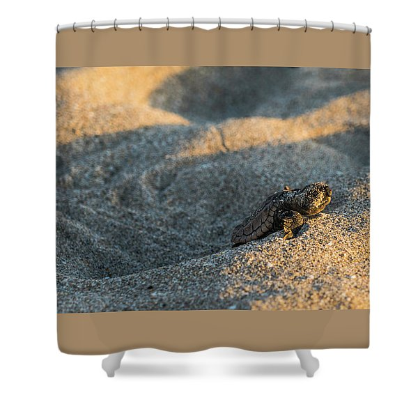 Brave Beginnings Sea Turtle Hatchling Delray Beach Florida Shower Curtain
