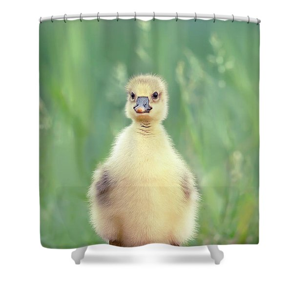 Brave New Baby - Gosling Ready To Conquer The World Shower Curtain