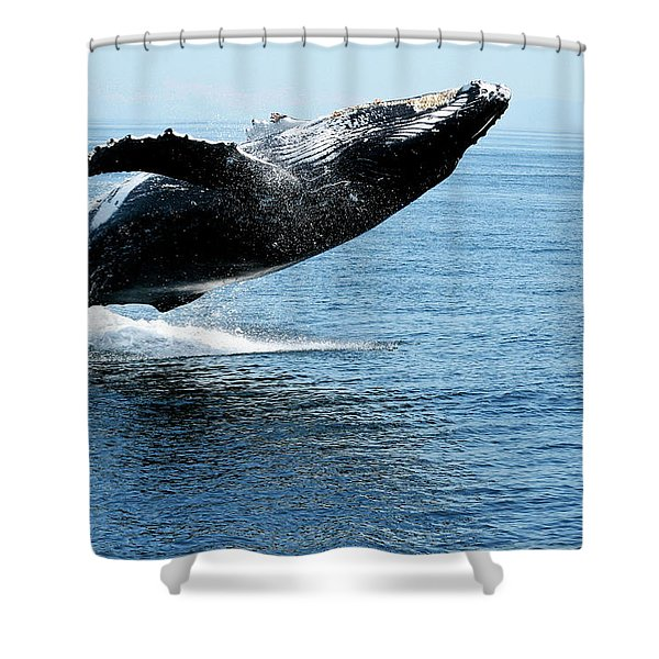 Breaching Humpback Whales Happy-2 Shower Curtain