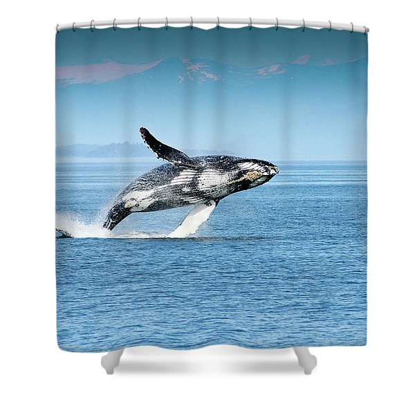 Breaching Humpback Whales Happy-4 Shower Curtain