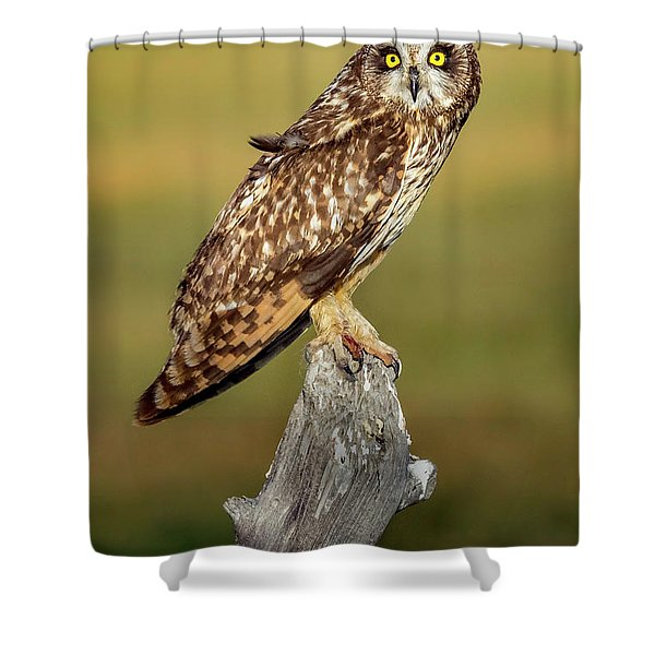 Bright-eyed Owl Shower Curtain