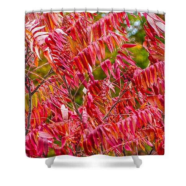 Bright Red Leaves Shower Curtain