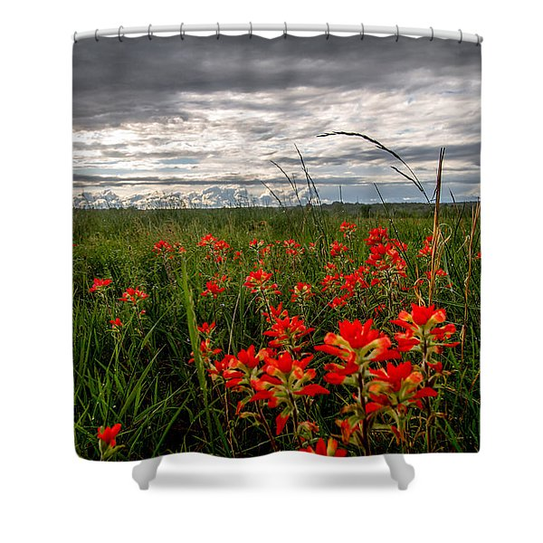 Brighten The Day - Indian Paintbrush On Stormy Day In Oklahoma Shower Curtain