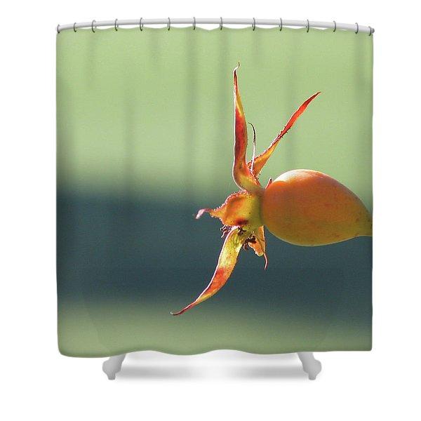 Brilliant Seed Pod Shower Curtain