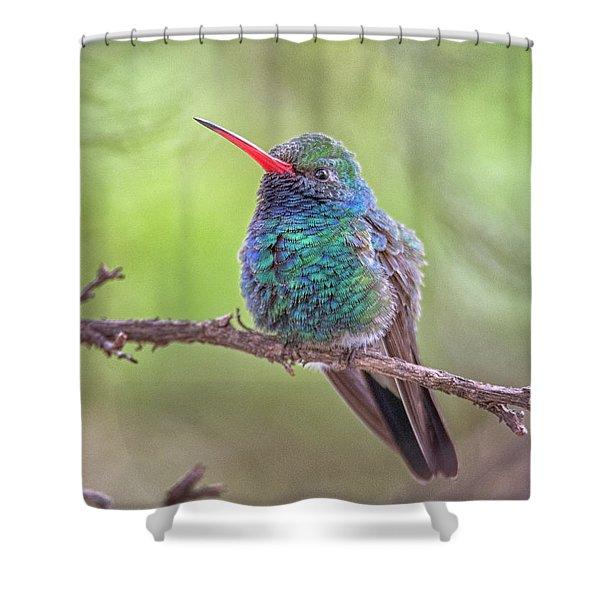 Broad-billed Hummingbird 3652 Shower Curtain